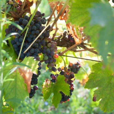 la pace di monte canneto vitigno